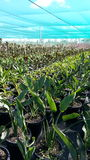 Exploração agrícola das plantas Imagem de Stock