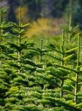 Exploração agrícola de árvore Fotos de Stock