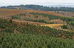 Exploração agrícola de árvore Fotografia de Stock
