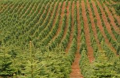 Exploração agrícola de árvore Imagens de Stock