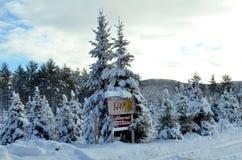 Exploração agrícola de árvore coberto de neve abandonada de Cristmas no país das maravilhas da floresta do inverno em Bridgton, M Fotos de Stock