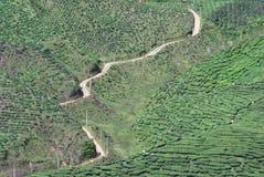 Exploração agrícola de árvore do chá Fotografia de Stock