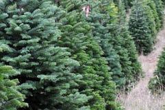 Exploração agrícola de árvore do Natal imagens de stock royalty free