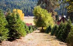 Exploração agrícola de árvore do Natal Fotografia de Stock Royalty Free