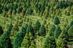 Exploração agrícola de árvore do Natal Imagens de Stock