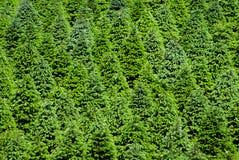 Exploração agrícola de árvore do Natal imagem de stock