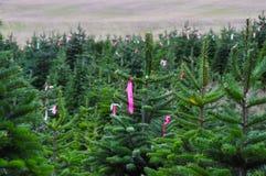 Exploração agrícola de árvore etiquetada do Natal fotos de stock