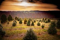 Exploração agrícola de árvore filtrada de Chrismas do vintage Fotos de Stock Royalty Free