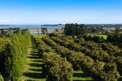 Exploração agrícola de árvore litoral do fruto, Nova Zelândia fotografia de stock royalty free