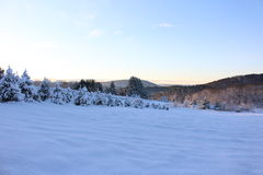 Exploração agrícola de árvore nevado do Natal de Vermont Fotografia de Stock Royalty Free