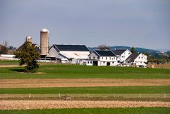 Exploração agrícola de Amish em Sunny Cloudless Day fotografia de stock