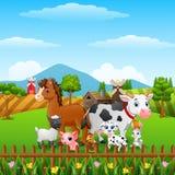 Exploração agrícola de animais feliz nos montes Fotografia de Stock Royalty Free