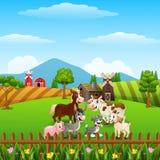 Exploração agrícola de animais nos montes Fotos de Stock