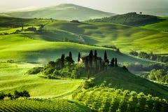 Exploração agrícola de bosques verde-oliva e de vinhedos Imagem de Stock