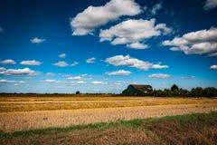 Exploração agrícola de Fenland Imagem de Stock