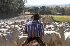 Exploração agrícola de gado imagem de stock