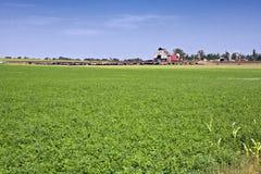 Exploração agrícola de gado de Kansas Fotos de Stock Royalty Free