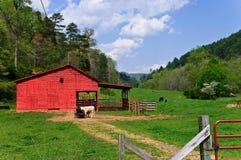 Exploração agrícola de gado pequena Fotos de Stock Royalty Free