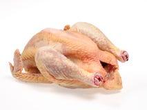 Exploração agrícola de galinha Foto de Stock