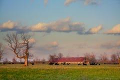 Exploração agrícola de Kentucky fotografia de stock royalty free