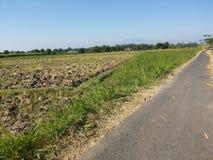 Exploração agrícola de leiteria indonésia, celeiro pelo campo do milho foto de stock