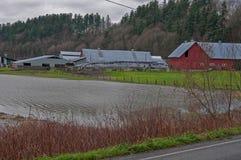 Exploração agrícola de leiteria inundada Fotos de Stock