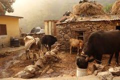 Exploração agrícola de leiteria rural da Índia Fotos de Stock