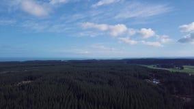 Exploração agrícola de pinheiro 4k aéreo vídeos de arquivo