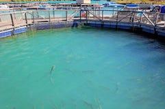 Exploração agrícola de Salmon Fish, Nova Zelândia Fotografia de Stock Royalty Free