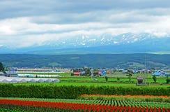Exploração agrícola de Tomita em junho Foto de Stock