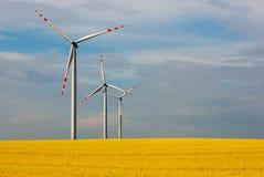 A exploração agrícola de vento e a colza bonita florescem na flor com um céu claro Imagens de Stock