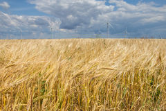 Exploração agrícola de vento litoral no meio de um campo de trigo, Botievo, Ucrânia Foto de Stock Royalty Free