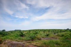 Exploração agrícola do óleo de palma Fotografia de Stock Royalty Free