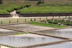 Exploração agrícola do arroz Imagens de Stock Royalty Free