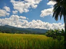 Exploração agrícola do arroz em Pua, Nan, Tailândia Fotografia de Stock