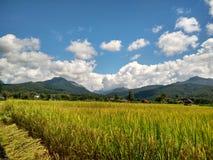 Exploração agrícola do arroz em Pua, Nan, Tailândia Fotos de Stock Royalty Free