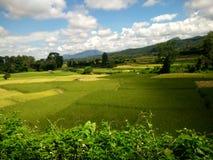 Exploração agrícola do arroz em Pua, Nan, Tailândia Foto de Stock Royalty Free