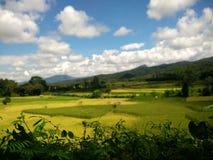 Exploração agrícola do arroz em Pua, Nan, Tailândia Imagem de Stock Royalty Free