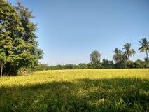 Exploração agrícola do arroz em Suphanburi, Tailândia Imagens de Stock