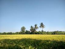 Exploração agrícola do arroz em Suphanburi, Tailândia Fotos de Stock
