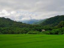 Exploração agrícola do arroz em Tailândia fotografia de stock royalty free