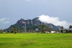 Exploração agrícola do arroz em Tailândia Foto de Stock