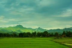 Exploração agrícola do arroz em Tailândia Foto de Stock Royalty Free