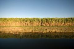 Exploração agrícola do bastão de açúcar Imagem de Stock