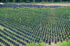 Exploração agrícola do berçário da planta Fotografia de Stock