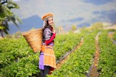 Exploração agrícola do campo da morango Imagens de Stock