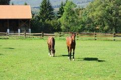 Exploração agrícola do cavalo. Fotos de Stock