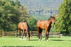 Exploração agrícola do cavalo. Fotografia de Stock Royalty Free