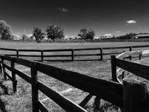 A exploração agrícola do cavalo cerca árvores do pasto em preto & em branco Imagens de Stock
