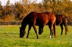 Exploração agrícola do cavalo de Kentucky fotos de stock royalty free